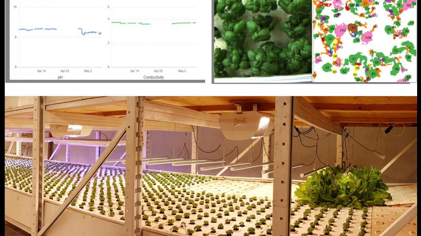 Students in M.Eng. Design program apply machine learning and data analytics to aquaponics farming